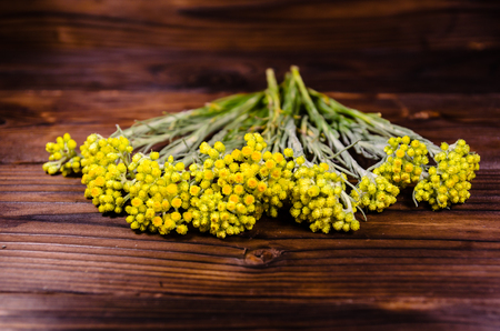 Medicinal plant helichrysum arenarium on rustic wooden table