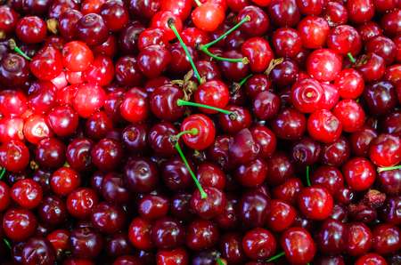 Texture of fresh ripe cherries for background