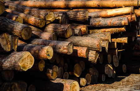 surface: Texture of the pine logs in for background Stock Photo