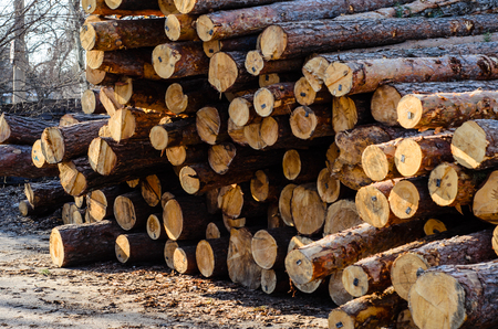 surface: Pile of the pine logs in a yard of sawmill