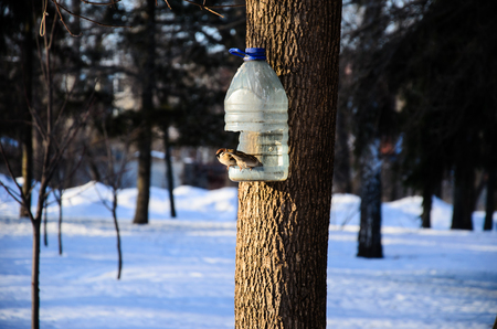 Grey sparrows on a feeder in a city park Stock Photo