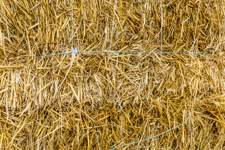Texture of the dry hay for background Banco de Imagens