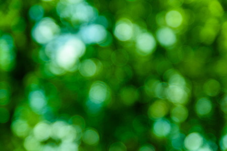 Defocused, abstract and blurred background. Green bokeh