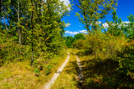 Dirt road in the forest on summer 版權商用圖片