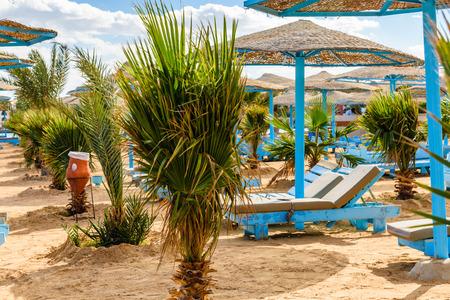 Rows of green palm trees on beach of Red sea 版權商用圖片