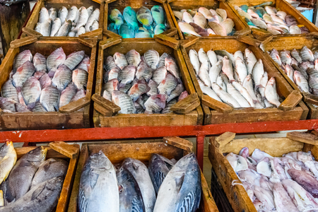 Different fish on fish market in Hurghada city, Egypt