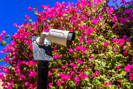Security camera among pink flowers in city street