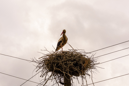 Storks in nest on high electric pole