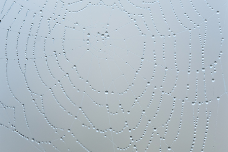 Drops of the water on spider web Banque d'images