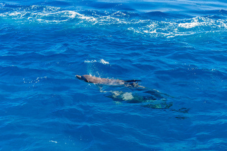Dolphins in Red sea not far from Hurghada city, Egypt Banco de Imagens - 123050201