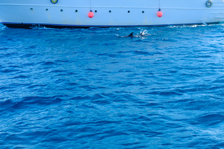 Dolphins near the yacht in Red sea not far from Hurghada city, Egypt Banco de Imagens