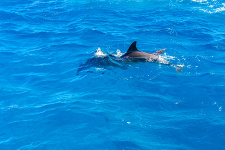 Dolphins in Red sea not far from Hurghada city, Egypt Banco de Imagens - 123121349