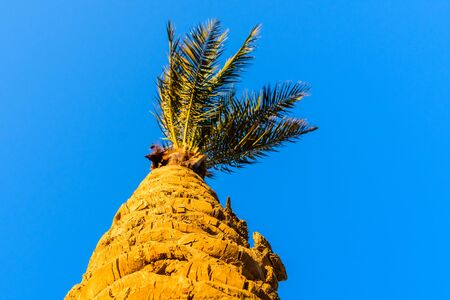 Green date palm tree against blue sky. Looking up