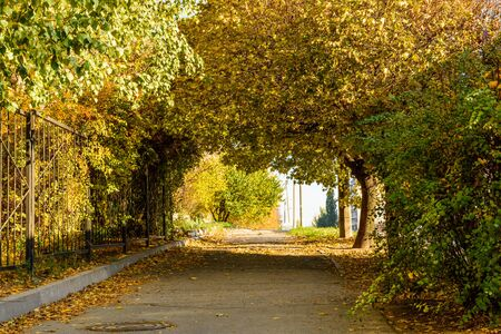 Alley with maple trees in city park on autumn