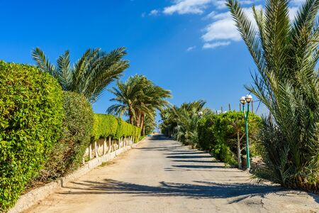 Green palm trees along the road to beach