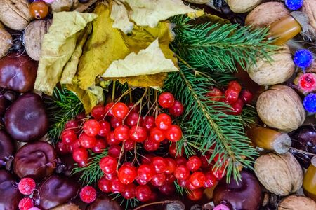 Beautiful autumn composition with viburnum berries and nuts