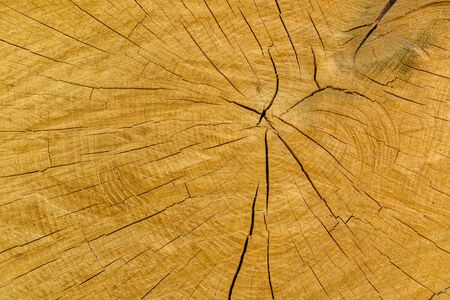 Natural wooden texture for background. Cross section Stok Fotoğraf