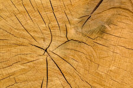 Natural wooden texture for background. Cross section Zdjęcie Seryjne