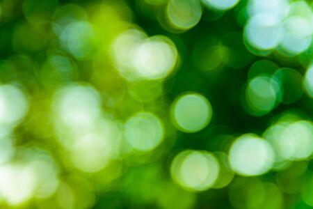 Fond de bokeh vert abstrait et défocalisé. Notion écologique