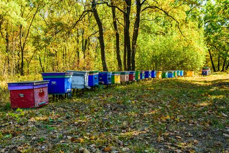 Multicolored bee hives at apiary in forest