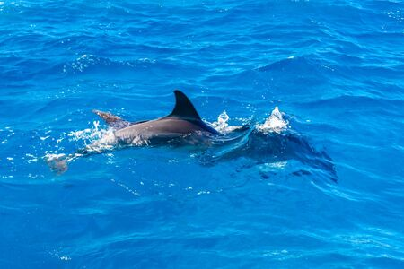 Dolphins in Red sea not far from Hurghada city, Egypt Banco de Imagens - 131534692