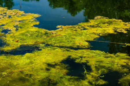 Green algae pollution on a water surface. Ecological concept 写真素材 - 133296713