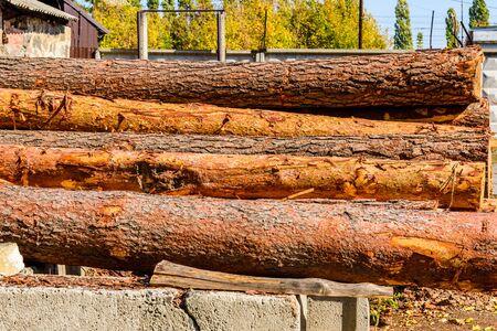 Pile of pine logs in sawmill yard