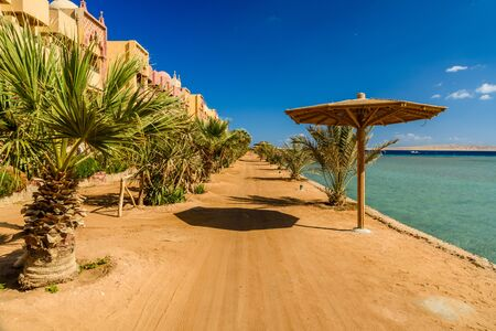 Rows of green palm trees on beach of Red sea