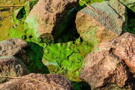 Green algae pollution on bank of river. Ecological concept