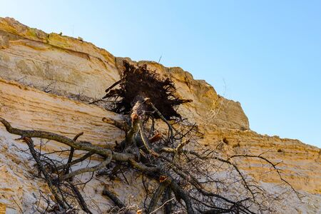 Fallen tree on sand hill at spring