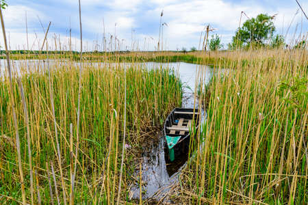 Old boat moored in thicket of reeds