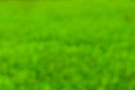 Defocused, abstract and blurred green backdrop. Bokeh background