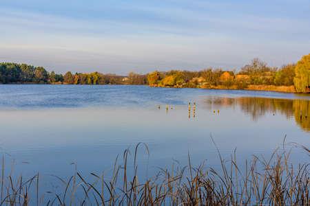 Trees on bank of lake on autumn