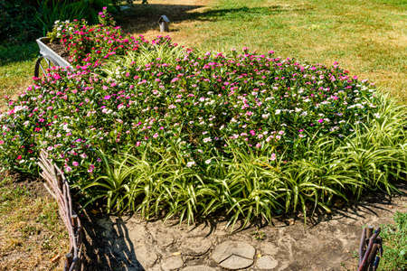 Different flowers on flowerbed in city park Archivio Fotografico