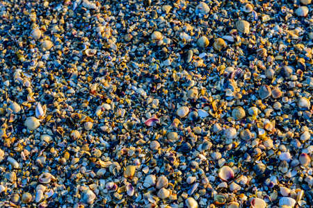 Background of many sea shells. Natural pattern 写真素材