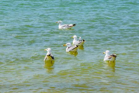 Flock of sea gulls swimming in sea