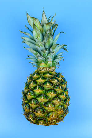 Whole ripe pineapple on a blue background 写真素材