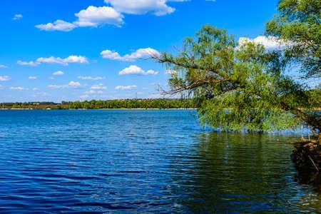 Trees growing above the water on Kremenchug reservoir. Summer landscape