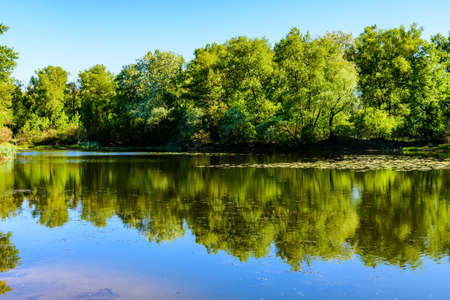 Lake in forest on summer. Reflection of trees in water