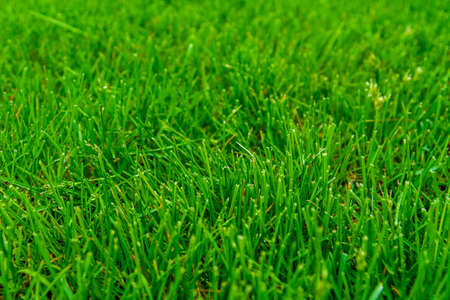 Background of green grass. Eco concept. Selective focus
