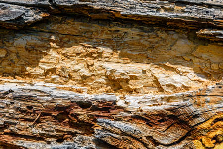 Texture of log damaged by wood pests. Wooden pattern for background