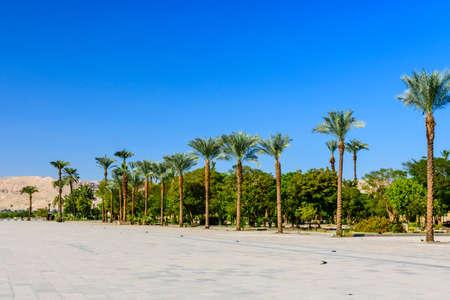 Palm trees on square near Karnak temple in Luxor, Egypt
