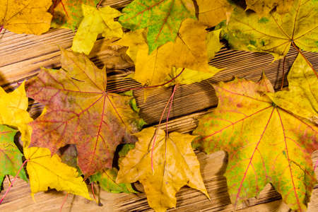 Heap of the yellow maple leaves on wooden table. Top view