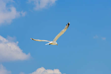 White sea gull flying above the sea