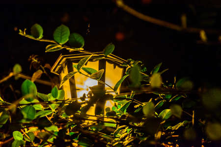 Old street lantern in green foliage at night