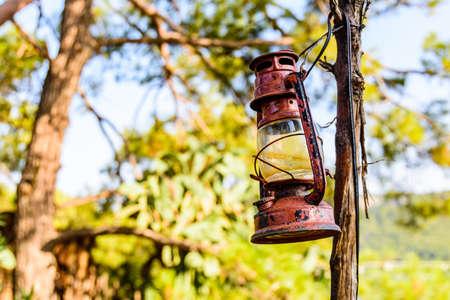 Old kerosene lamp hanging on branch of tree