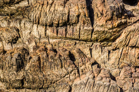Texture of palm tree trunk for background