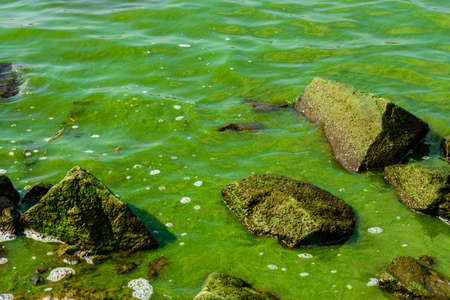 Green algae pollution on a water surface. Ecological concept