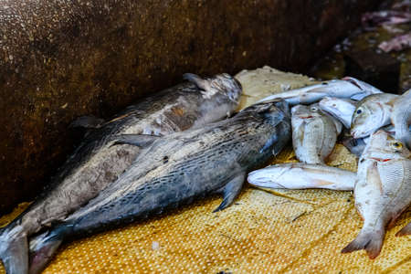 King mackerel fish for sale at fish market
