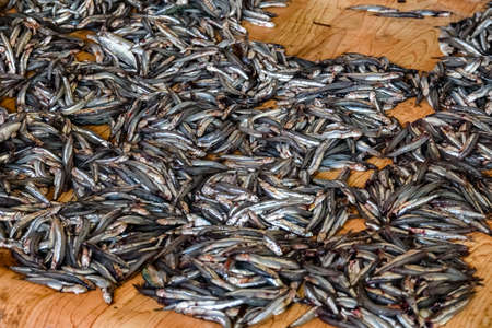 Capelin fish for sale at fish market
